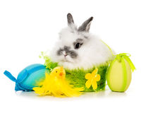 Rabbit  with colored eggs Royalty Free Stock Photo