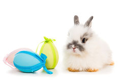 Rabbit  with colored eggs Stock Photos