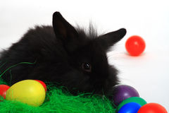 Rabbit and colorful eggs. Closeup of cute black baby rabbit with colorful eggs, isolated on white background Stock Images
