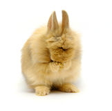 Rabbit cries. The small rabbit cries on white Royalty Free Stock Photography