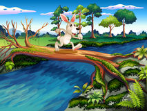 A rabbit crossing the river Stock Photography