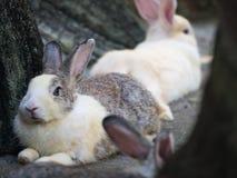 The Rabbit Crouching Stock Photos