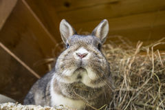 Rabbit. A cute rabbit in a hutch Royalty Free Stock Images