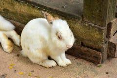 Rabbit cuties Stock Image