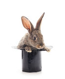 Rabbit in cylinder. Rabbit in cylinder on a white background Stock Image