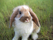 Rabbit decorative Stock Image