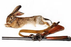 Rabbit and the disassembled gun. The rabbit lies on a white background, in the foreground the disassembled gun Royalty Free Stock Photography