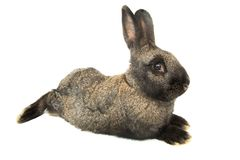 Rabbit  distorted by a wide-angle close-up. Rabbit distorted by a wide-angle close-up, on a white background Royalty Free Stock Image