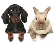 Rabbit and dog. Close-up portrait Stock Photos