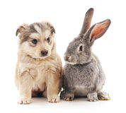 Rabbit and dog. Royalty Free Stock Photography