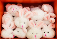 Rabbit doll in cabinet Stock Photography