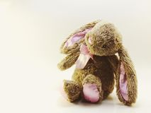 Rabbit doll on white background space for text vintage filters color Stock Photos