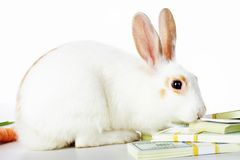 Rabbit and dollars Royalty Free Stock Photo