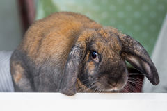 Rabbit in doorway Stock Photography