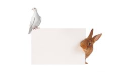 Rabbit and dove Royalty Free Stock Images