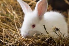 Rabbit on Dry Grass Royalty Free Stock Photos