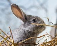 Rabbit on Dry Grass Stock Photo