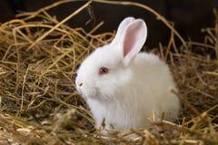 Rabbit on Dry Grass Stock Photos