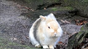 Rabbit, dwarf bunny, outside, easter stock video footage