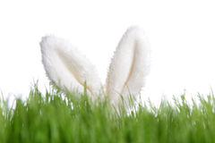 Rabbit ears behind green grass Stock Photo