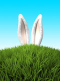 Rabbit ears in the grass Stock Images
