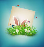 Rabbit ears sticking out of the grass and the card with place for congratulations. Royalty Free Stock Image