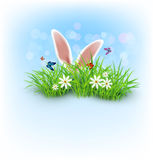 Rabbit ears sticking out of the grass Stock Images