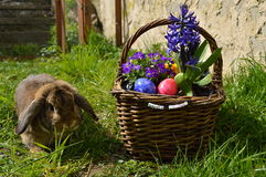 Rabbit with easter basket Royalty Free Stock Image