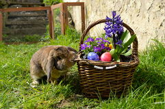 Rabbit with easter basket Stock Images