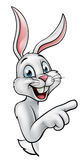 Rabbit or Easter Bunny Pointing Royalty Free Stock Images