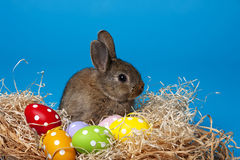 Rabbit and easter eggs Royalty Free Stock Images