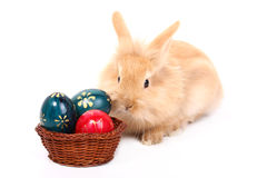Rabbit with easter eggs Stock Image