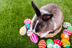 Rabbit and easter eggs Stock Photos