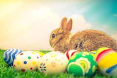 Rabbit and easter eggs in green grass with blue sky ( Filtered i Royalty Free Stock Photo