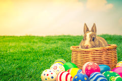 Rabbit and easter eggs in green grass with blue sky ( Filtered i Royalty Free Stock Photography