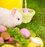 Rabbit and easter eggs in green grass Royalty Free Stock Photo