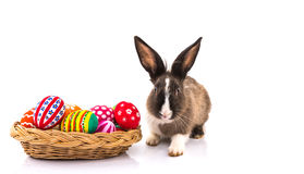 Rabbit with Easter eggs isolated Stock Photography