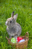 Rabbit and easter eggs Royalty Free Stock Photo