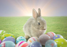 Rabbit with Easter eggs with sunset background. Royalty Free Stock Image