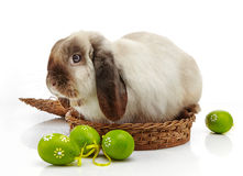 Rabbit and Easter eggs Royalty Free Stock Image