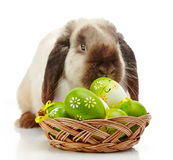Rabbit and Easter eggs Royalty Free Stock Photography