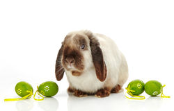 Rabbit and Easter eggs Royalty Free Stock Photos