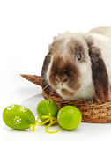 Rabbit and Easter eggs Stock Photo