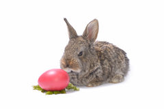 Rabbit and easter eggs on white stock images