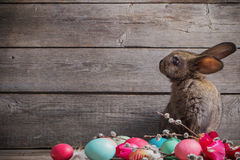 Rabbit with Easter eggs Royalty Free Stock Images