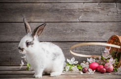 Rabbit with Easter eggs. On wooden background royalty free stock image