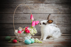 Rabbit with Easter eggs Stock Images