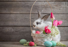 Rabbit with Easter eggs Royalty Free Stock Image