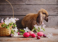 Rabbit with Easter eggs Royalty Free Stock Photography