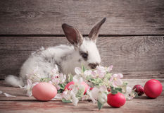 Rabbit with Easter eggs Stock Photo
